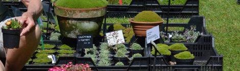 Växtmarknader