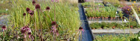 Besök  Rolands Plantskola 5 augusti