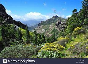 Botanisk vandringsresa till Gran Canaria 3-10 mars 2019