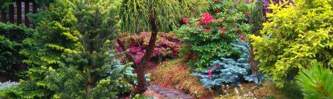 Besök trädgårdar och plantskola i Bohuslän den 12 augusti 2018