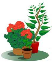 Växtmarknad i Vikmanshyttan